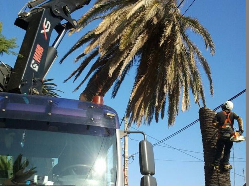 Etetage d'un palmier a Biot 06