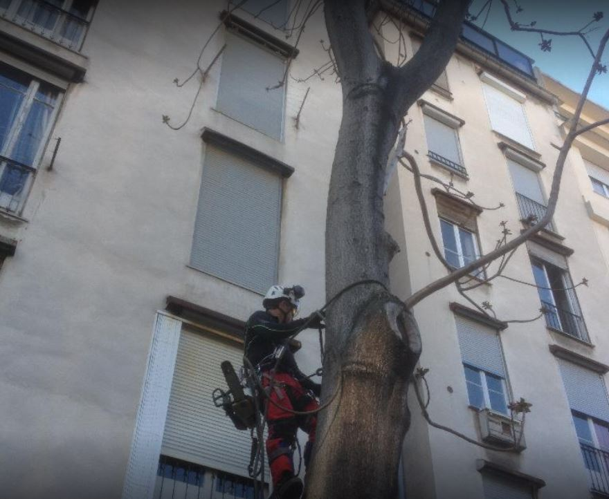Elagueur grimpeur en milieu urbain Nice - Cannes 06