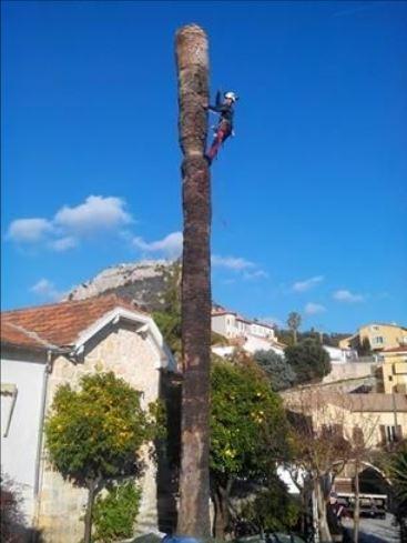 Abattage de palmier Antibes 06 - Clean Jardin - Devis Gratuit